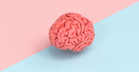 Human brain against a tow side ground, concept image for feminism and woman rights- Stock Photo or Stock Video of rcfotostock | RC-Photo-Stock