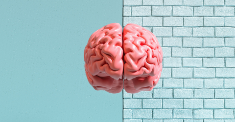 Human brain against a wall, concept image for feminism and woman rights- Stock Photo or Stock Video of rcfotostock | RC-Photo-Stock