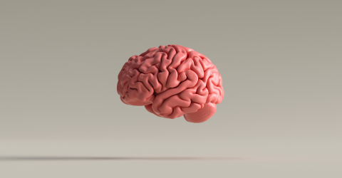 Human brain against, concept image for feminism and woman rights- Stock Photo or Stock Video of rcfotostock | RC-Photo-Stock