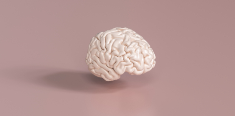 Human brain Anatomical Model, medical concept image- Stock Photo or Stock Video of rcfotostock | RC-Photo-Stock