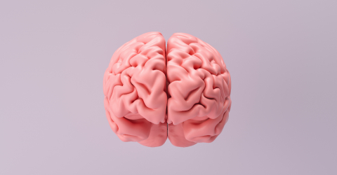 Human brain Anatomical Model, medical concept image : Stock Photo or Stock Video Download rcfotostock photos, images and assets rcfotostock | RC-Photo-Stock.: