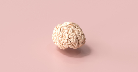 Human brain Anatomical Model on floor- Stock Photo or Stock Video of rcfotostock | RC-Photo-Stock