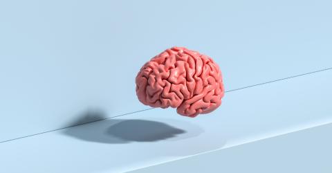 Human brain Anatomical Model on ground- Stock Photo or Stock Video of rcfotostock | RC-Photo-Stock