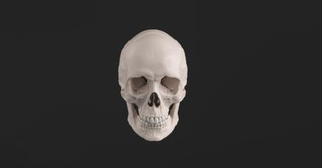 Human Skull and Jaw Bone front view Pirate Poison Horror Symbol Halloween Medical. Anatomy and medicine concept image. : Stock Photo or Stock Video Download rcfotostock photos, images and assets rcfotostock   RC-Photo-Stock.: