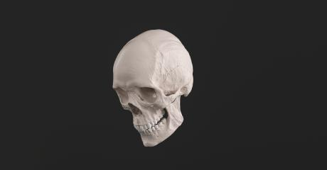 Human Skull and Jaw Bone side view Pirate Poison Horror Symbol Halloween Medical. Anatomy and medicine concept image.- Stock Photo or Stock Video of rcfotostock   RC-Photo-Stock