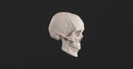 Human Skull and Jaw Bone side view Pirate Poison Horror Symbol Halloween Medical. Anatomy and medicine concept image. : Stock Photo or Stock Video Download rcfotostock photos, images and assets rcfotostock | RC-Photo-Stock.:
