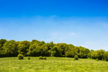 idyllic forest landscape in summer- Stock Photo or Stock Video of rcfotostock | RC-Photo-Stock