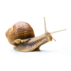 interested snail : Stock Photo or Stock Video Download rcfotostock photos, images and assets rcfotostock | RC-Photo-Stock.: