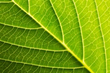 leaf background texture- Stock Photo or Stock Video of rcfotostock | RC-Photo-Stock