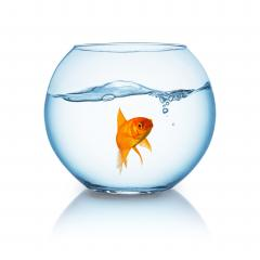 lonely goldfish in a fishbowl  : Stock Photo or Stock Video Download rcfotostock photos, images and assets rcfotostock | RC-Photo-Stock.: