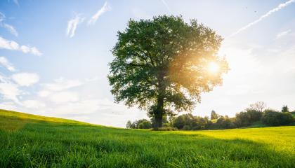 lonely old bald tree on a fresh green meadow at sunset, a vibrant rural landscape with blue sky : Stock Photo or Stock Video Download rcfotostock photos, images and assets rcfotostock | RC-Photo-Stock.: