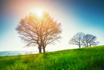 Lonely tree on a field of grass in spring with beautiful bright sun rays- Stock Photo or Stock Video of rcfotostock | RC-Photo-Stock
