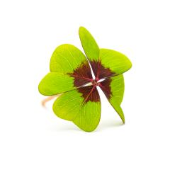 Lucky Clover- Stock Photo or Stock Video of rcfotostock | RC-Photo-Stock
