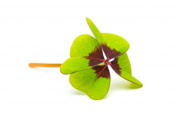 Lucky Clover leaf- Stock Photo or Stock Video of rcfotostock | RC-Photo-Stock