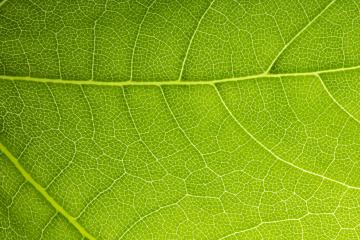 Macro Photo Of Natural Green Leaf Pattern- Stock Photo or Stock Video of rcfotostock | RC-Photo-Stock