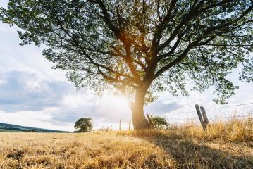 magical sunrise with oak tree- Stock Photo or Stock Video of rcfotostock | RC-Photo-Stock