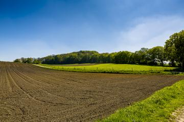 maize field with young plants and forest- Stock Photo or Stock Video of rcfotostock | RC-Photo-Stock