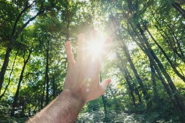 male hand against the forest pass sun beams- Stock Photo or Stock Video of rcfotostock | RC-Photo-Stock