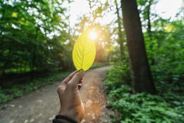 Male hand holding green leaf against the forest with path and sun light rays. Spring time season.- Stock Photo or Stock Video of rcfotostock | RC-Photo-Stock