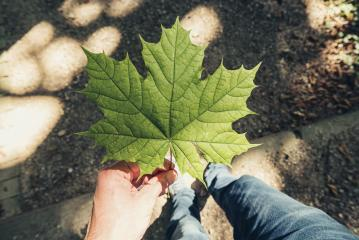 male hand holding leaf at a summer day in the forest, Point of view shot- Stock Photo or Stock Video of rcfotostock | RC-Photo-Stock