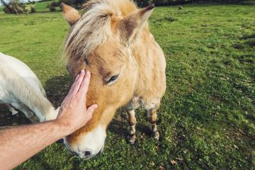 man hand stroking horse- Stock Photo or Stock Video of rcfotostock | RC-Photo-Stock