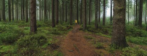 man in yellow rain jacket goes on a path in to the forest, banner size- Stock Photo or Stock Video of rcfotostock | RC-Photo-Stock