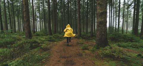 man in yellow rain jacket runs in the forest, fog, rain and mist- Stock Photo or Stock Video of rcfotostock   RC-Photo-Stock