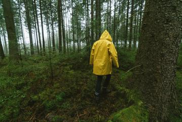 man in yellow rain jacket walks in to the spooky and foggy forest- Stock Photo or Stock Video of rcfotostock | RC-Photo-Stock