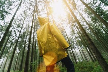 man with yellow rain jacket look to the tree tops in a forest- Stock Photo or Stock Video of rcfotostock | RC-Photo-Stock
