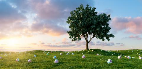 Many colorful Easter eggs lie in a meadow around a tree for Easter with dramtic sunset sky- Stock Photo or Stock Video of rcfotostock | RC-Photo-Stock