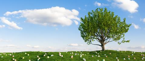 Many colorful Easter eggs lie in the grass of a meadow with tree for Easter : Stock Photo or Stock Video Download rcfotostock photos, images and assets rcfotostock | RC-Photo-Stock.:
