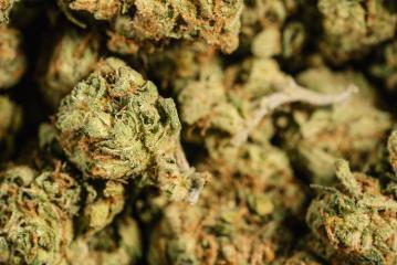 Medicinal Marijuana Weed Cannabis Dope- Stock Photo or Stock Video of rcfotostock | RC-Photo-Stock