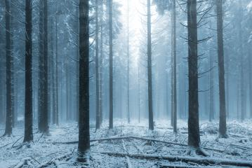 misty winter forest  : Stock Photo or Stock Video Download rcfotostock photos, images and assets rcfotostock | RC-Photo-Stock.: