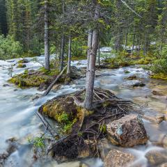 moraine lake brook in the woods at banff canada : Stock Photo or Stock Video Download rcfotostock photos, images and assets rcfotostock | RC-Photo-Stock.: