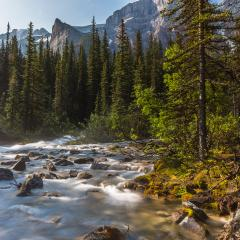 moraine lake brook in the woods at banff canada- Stock Photo or Stock Video of rcfotostock | RC-Photo-Stock