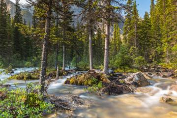 moraine lake brook in the woods with rocky mountains at banff canada  : Stock Photo or Stock Video Download rcfotostock photos, images and assets rcfotostock | RC-Photo-Stock.: