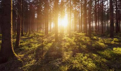 Morning light sunrays in the deep forest- Stock Photo or Stock Video of rcfotostock | RC-Photo-Stock