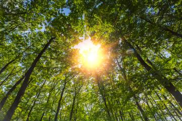 morning sun shining through the treetop in a deep forest- Stock Photo or Stock Video of rcfotostock | RC-Photo-Stock