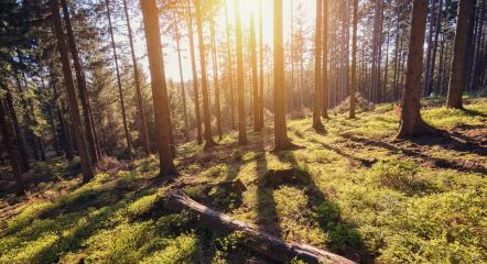 Morning sunlight in the forest : Stock Photo or Stock Video Download rcfotostock photos, images and assets rcfotostock | RC-Photo-Stock.: