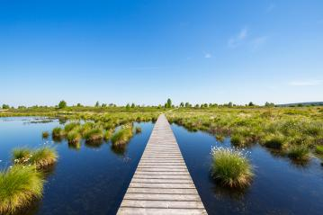 National Park Hautes Fagnes at spring : Stock Photo or Stock Video Download rcfotostock photos, images and assets rcfotostock | RC-Photo-Stock.: