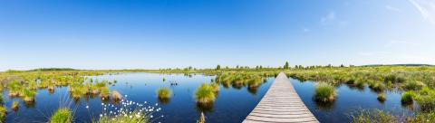 National Park Hautes Fagnes in Belgium : Stock Photo or Stock Video Download rcfotostock photos, images and assets rcfotostock | RC-Photo-Stock.: