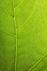 Natural Green Leaf Pattern background- Stock Photo or Stock Video of rcfotostock | RC-Photo-Stock