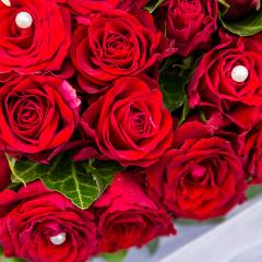 Natural red roses background- Stock Photo or Stock Video of rcfotostock | RC-Photo-Stock
