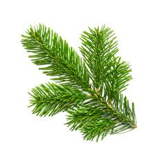 nature fir branche- Stock Photo or Stock Video of rcfotostock | RC-Photo-Stock