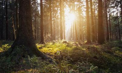 nature green wood sunlight background- Stock Photo or Stock Video of rcfotostock | RC-Photo-Stock