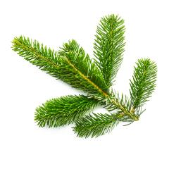 nature tree fir branche - Stock Photo or Stock Video of rcfotostock | RC-Photo-Stock