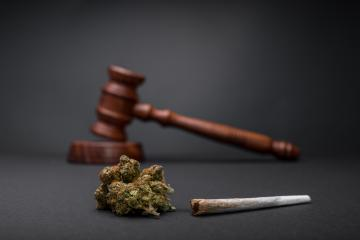 New Law - Legalize Marijuana. Wooden judge hammer. Cannabis legalization as medical drug. CBD healing social issue concept. Legality of cannabis, legal and illegal cannabis.- Stock Photo or Stock Video of rcfotostock | RC-Photo-Stock