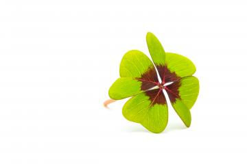 new year's eve Lucky Clover- Stock Photo or Stock Video of rcfotostock | RC-Photo-Stock