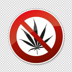 No cannabis. No marijuana Cannabis leaf, Marijuana (weed, hemp) is forbidden,  prohibition sign, on checked transparent background. Vector illustration. Eps 10 vector file.- Stock Photo or Stock Video of rcfotostock | RC-Photo-Stock