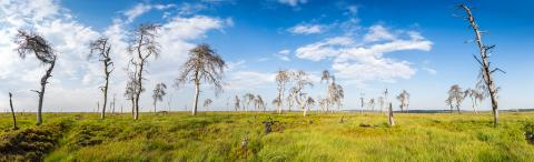 Noir Flohay (Hautes Fagnes) panorama  : Stock Photo or Stock Video Download rcfotostock photos, images and assets rcfotostock | RC-Photo-Stock.: